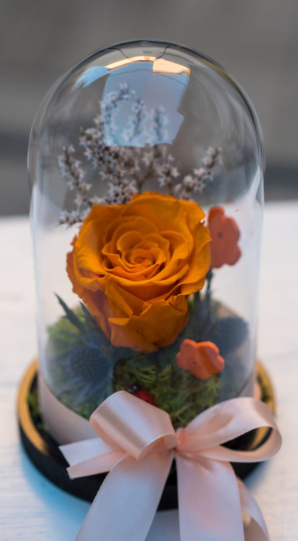Cupola, trandafiri criogenati , cadoul perfect, aranjamente florale, flori Sibiu